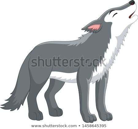 Rajz farkas szafari illusztráció sétál kutya Stock fotó © cthoman