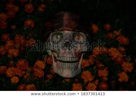Scared Marigold Stock photo © cthoman