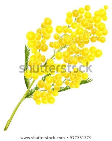 Amarelo flor ramo flor símbolo Foto stock © orensila