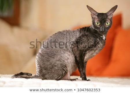 猫 子猫 座って 見える ストレート レンズ ストックフォト © CatchyImages