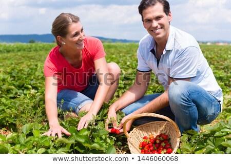 女性 男 あなた自身 イチゴ フィールド 忙しい ストックフォト © Kzenon
