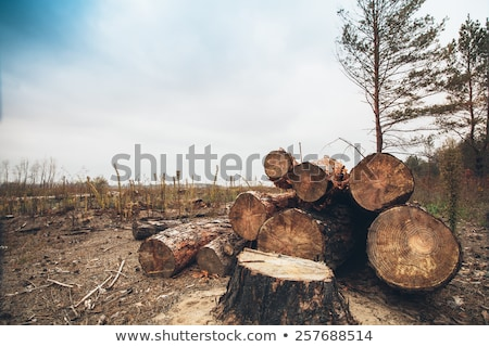 Stack of cut trees. Stock photo © lichtmeister