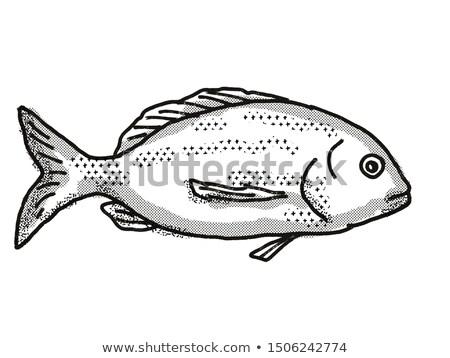 Yellowfin Bream Australian Fish Cartoon Retro Drawing Stock photo © patrimonio