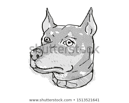 German Pinscher Dog Breed Cartoon Retro Drawing Stock photo © patrimonio