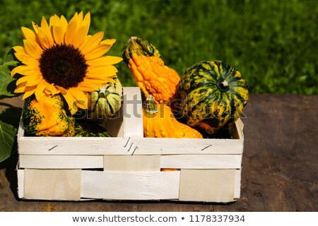 Foto stock: Thanksgiving Background With Autumn Fruits And Gourds On A Rustic Wooden Table Autumn Harvest Top