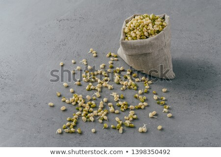 Fresh sprouted mung beans in canvas sack and spread on grey surface. Green organic gram for your hea Stock photo © vkstudio