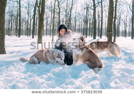 Vrouw winter leuk hond Stockfoto © blasbike