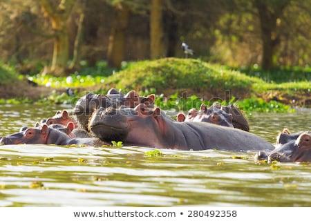 békés · kilátás · tó · Afrika · Kenya · tavasz - stock fotó © anna_om