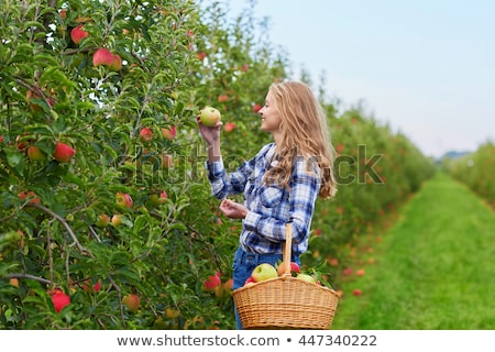 Smiling Apple Picking Fruit In Orchard Stock photo © adrian_n