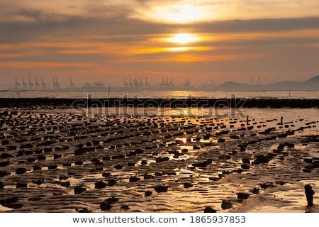 sunset at wetland and coast of hong kong stock photo © kawing921