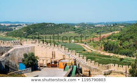 Olive Groves - Obidos Portugal Stock photo © jeayesy