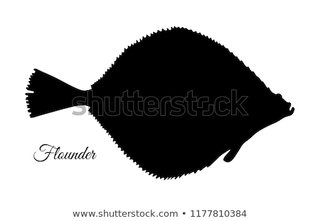 Silhouette of flounder stock photo © perysty