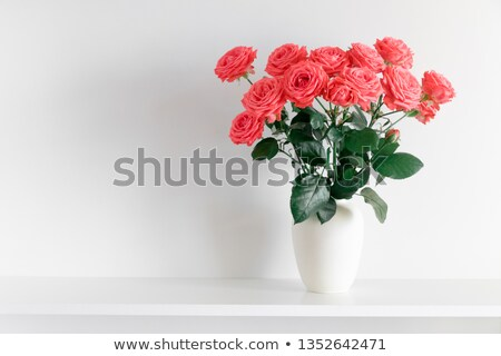 Буш · красную · розу · белый · цветения · саду · трава - Сток-фото © Traven