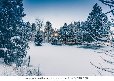Hiver paysage nord-ouest Noël ciel forêt Photo stock © mariephoto