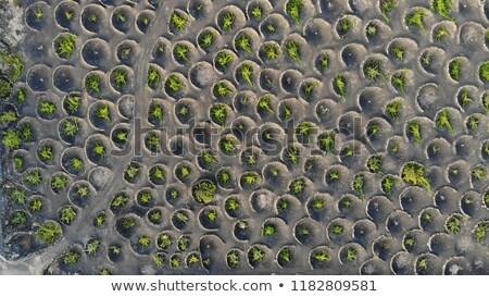 volcanic wine area La Geria Stock photo © meinzahn