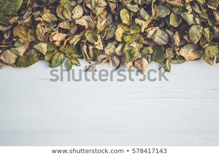 Dying wilted roses on wooden decking background Stock photo © jenbray
