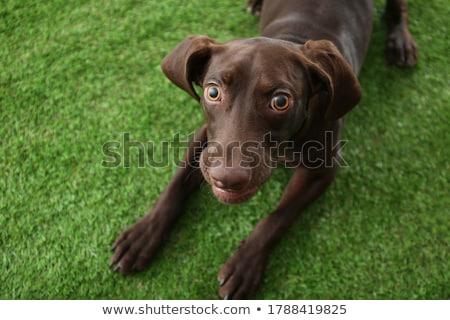 щенков · за · пределами · трава · собака · лес · животного - Сток-фото © willeecole