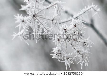 красивой · фото · морозный · завода · снега - Сток-фото © nneirda