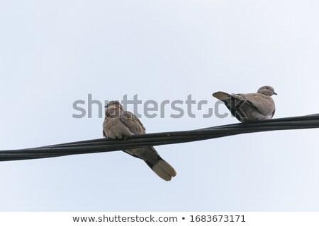 madarak · drótok · ül · naplemente · nap · csoport - stock fotó © sirylok