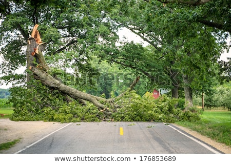 Fallen tree across the road Stock photo © olandsfokus