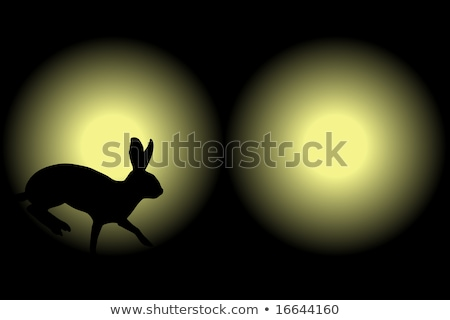 Headlight rabbit Stock photo © Tawng