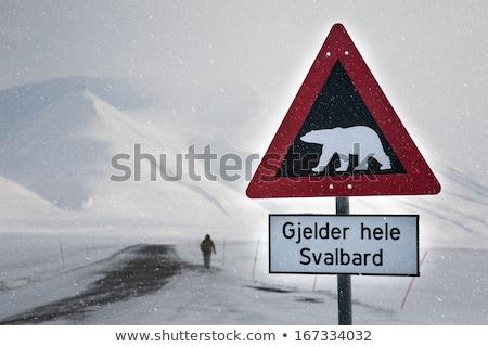 Sarki medvék figyelmeztető jel jegesmedve figyelmeztetés feliratok Stock fotó © dinozzaver