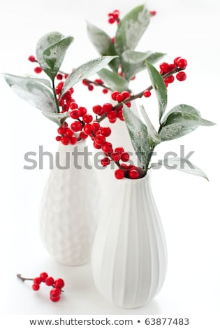 still life with plants and hoar frost in winter Stock photo © meinzahn