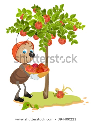 Ant Gardener gather apples. Apple tree and red ripe apples. Orchard Stock photo © orensila