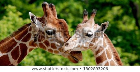 вектора · жираф · носорог · слон · Африка · дерево - Сток-фото © mayboro1964