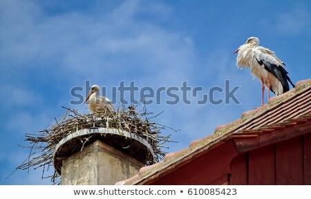 ooievaar · lopen · dak · hemel · natuur · vogel - stockfoto © mariephoto