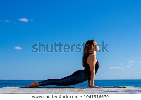 コブラ 風景 実例 日没 砂漠 動物 ストックフォト © adrenalina