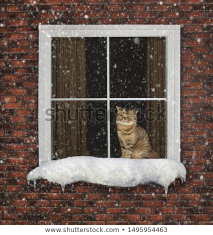 kat · tapijt · groot · gember · vloer · top - stockfoto © capturelight