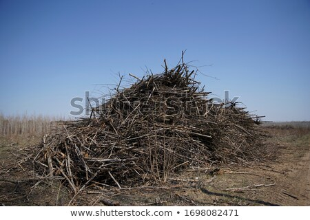 Dried wooden log and branch Stock photo © colematt