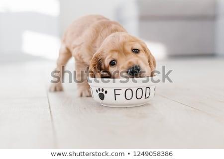 Aranyos kicsi arany kutyakölyök áll felfelé Stock fotó © ozgur