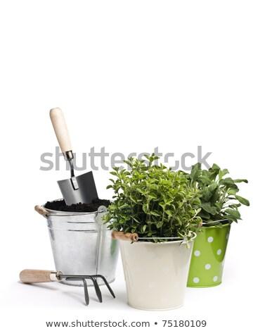Kert friss gyógynövények kerti eszközök köteg fehér Stock fotó © Lana_M