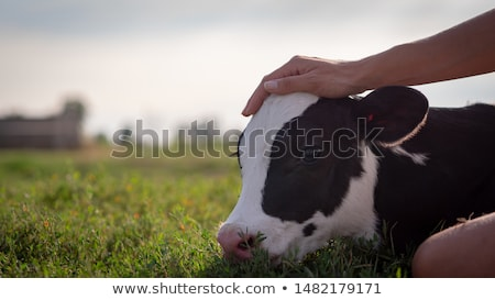 gazda · kép · mosoly · épület · művészet · farm - stock fotó © bluering