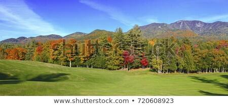 Autunno panorama betulla albero montagna Georgia Foto d'archivio © Kotenko