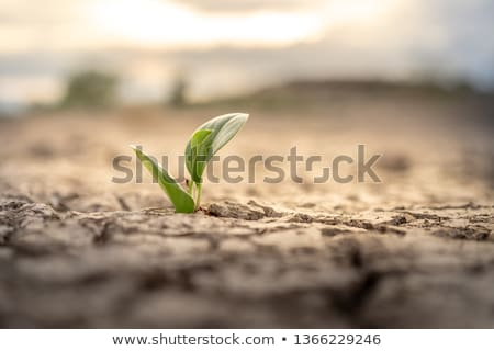 Sprout grows from ground. Plants in soil Stock photo © popaukropa