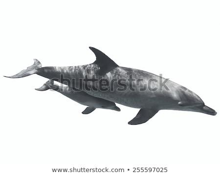 Flutuante golfinho branco ilustração água fundo Foto stock © bluering