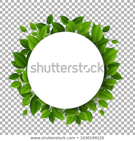 színes · virágok · labda · gradiens · háló · virág - stock fotó © cammep