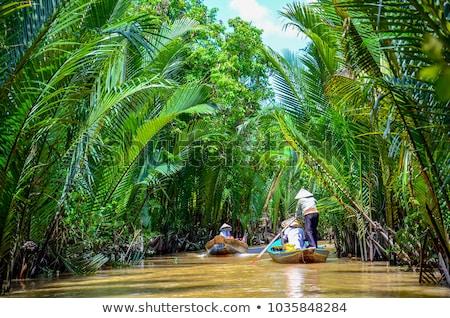 Delta Vietnã pormenor água floresta verde Foto stock © boggy