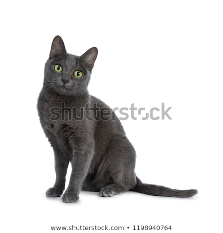 side view of adorable grey cat sitting and looking behind Stock photo © feedough