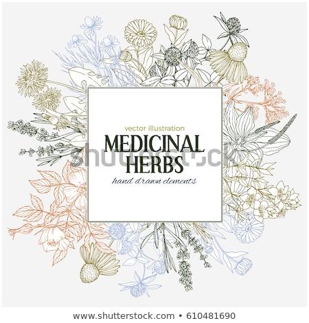 Stok fotoğraf: Renk · bağbozumu · tıbbi · bitkiler · otlar · afiş
