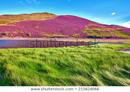 mező · virág · levél · kert · nyár · kék - stock fotó © agfoto
