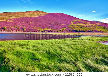 Herbe verte fleurs herbe peu profond fleur Photo stock © AGfoto