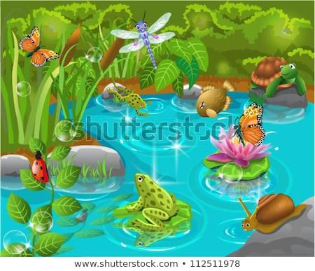 Сток-фото: пруд · сцена · иллюстрация · природы · фон · дождь
