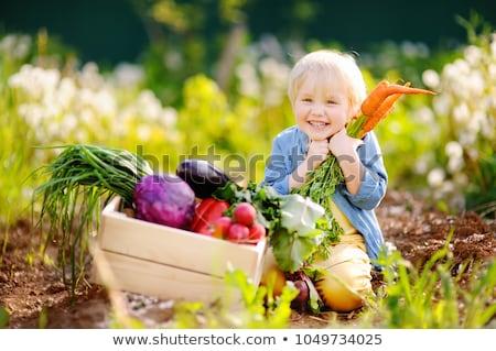Mały cute chłopca organiczny bio warzyw Zdjęcia stock © galitskaya