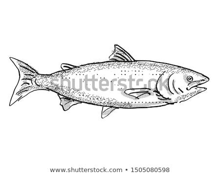 Nowa Zelandia króla łososia ryb cartoon retro Zdjęcia stock © patrimonio