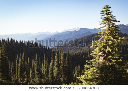 Mountain ranges and tress on a sunny day Stock photo © wavebreak_media