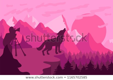 Photographer photographs the wild wolf in nature Stock photo © barsrsind